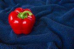 Una pimienta roja en un fondo azul fotografía de archivo