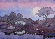 Una pintura de la acuarela de un coyote que salta sobre una piscina del agua inmóvil debajo de una Luna Llena en el sudoeste del stock de ilustración