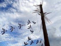 Una pintura en metal de una multitud de pájaros en vuelo por el artista aborigen Dennis Nona Foto de archivo