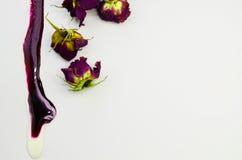 Una pintura violeta derramada, rosas secadas hermosas Imágenes de archivo libres de regalías