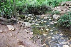 Una pista de senderismo cerca de un río Imagen de archivo libre de regalías