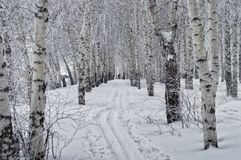 Una pista del esquí en la nieve en el bosque del invierno Imágenes de archivo libres de regalías