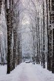 Una pista del invierno Fotos de archivo libres de regalías