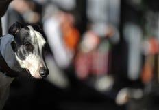 Una pista del perro Imagen de archivo