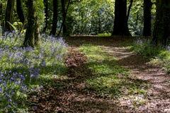 Una pista del terreno boscoso serpeggia attraverso il legno di Bluebell Fotografie Stock