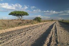 Una pista sola della strada in savanna. Immagini Stock Libere da Diritti