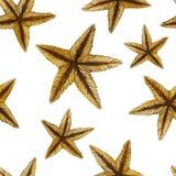 Una pittura dell'acquerello di un colore della sabbia di una stella marina ha petrificato la classe A di invertebrati quali gli e Immagini Stock Libere da Diritti