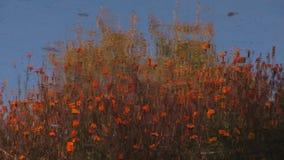 Una pittura di Monet su uno stagno di acqua Fotografie Stock