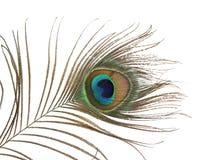 Una piuma del pavone Immagini Stock