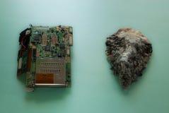 Una placa de circuito impresa y una cáscara de ostra que mienten en un fondo verde claro Imagenes de archivo