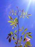 Una planta con el sol fuerte y el cielo azul fotos de archivo libres de regalías