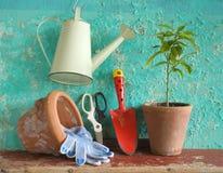 Una planta con las herramientas que cultivan un huerto Fotos de archivo libres de regalías