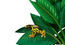 Una planta con una rana stock de ilustración