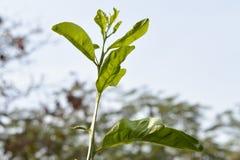 Una planta derecha minúscula Imagen de archivo libre de regalías