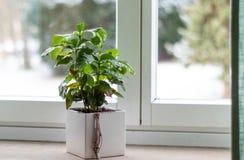 Una planta en el alféizar foto de archivo