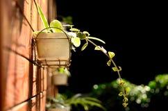Una planta en el flowerplot Foto de archivo