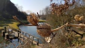 Una planta en el parque Imagen de archivo