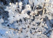 Una planta en invierno Fotos de archivo libres de regalías