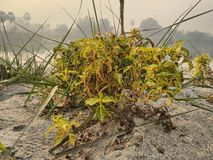 Una planta en la arena en el riverbank fotografía de archivo libre de regalías
