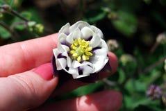 Una planta en manos femeninas Fotos de archivo