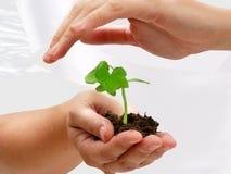 Una planta en manos humanas Foto de archivo libre de regalías
