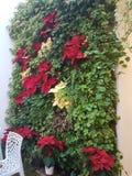 Una planta en una pared del restaurante imágenes de archivo libres de regalías