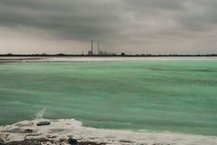 Una planta en un lago de la turquesa imágenes de archivo libres de regalías