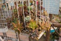 Una planta en una jaula Fotografía de archivo libre de regalías