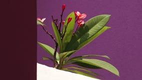 Una planta hermosa de la casa en un día soleado metrajes