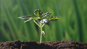 Una planta hermosa joven de la mano un árbol en una atmósfera natural y mágica romántica almacen de metraje de vídeo