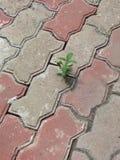 Una planta linda minúscula en la calle fotos de archivo