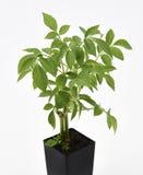 Una planta más vieja Fotografía de archivo libre de regalías