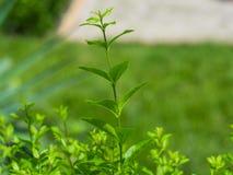 Una planta macra Imagenes de archivo