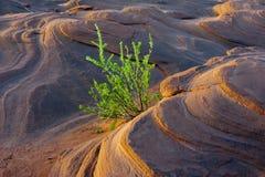 Una planta obstinada en la piedra foto de archivo libre de regalías