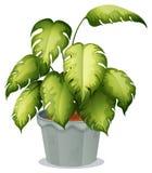 Una planta ornamental en un pote stock de ilustración