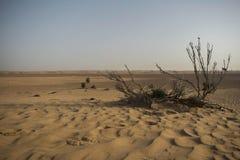 Una planta secada en un área abandonada, el desierto de Dubai Foto de archivo