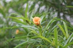 Una planta verde durante una estaci?n de verano caracterizada por una flor anaranjada fotografía de archivo libre de regalías