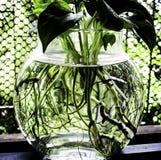 Una planta y un agua Imágenes de archivo libres de regalías