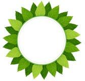 Una plantilla redonda vacía rodeada con las hojas verdes ilustración del vector