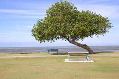 Una playa del árbol Fotos de archivo libres de regalías