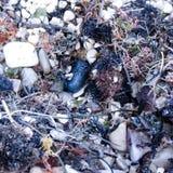 Una playa después del clima tempestuoso imagen de archivo