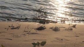 Una playa en el Danubio almacen de metraje de vídeo