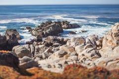 Una playa rocosa escénica a través de Pebble Beach y de la arboleda pacífica en la península de Monterey en California Fotografía de archivo