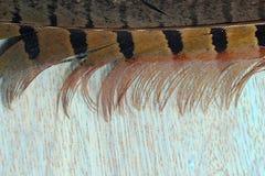 Una pluma Imagen de archivo