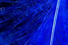 Una pluma azul como fondo abstracto Imagen de archivo libre de regalías