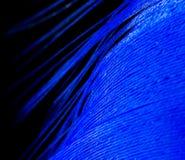 Una pluma azul como fondo abstracto Fotografía de archivo