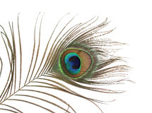 Una pluma del pavo real Imagenes de archivo