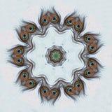 Una pluma del pavo real Fotos de archivo libres de regalías