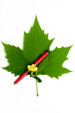 Una pluma roja con la hoja verde Foto de archivo