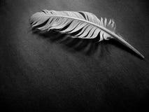 Una pluma solamente imágenes de archivo libres de regalías